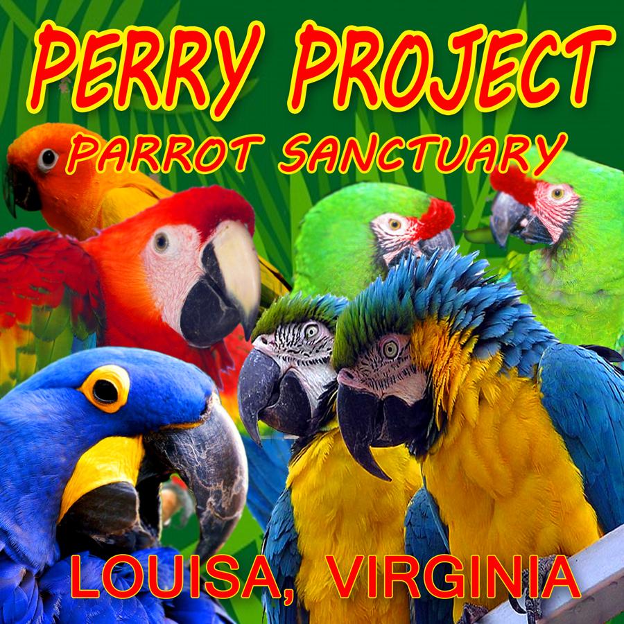 P1 - Project Perry Parrot Sanctuary